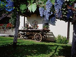 South Tyrol Museum of Wine